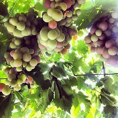 Vineyard Photograph - #grapes #vineyards #spain #cuenca by Axel Loughrey
