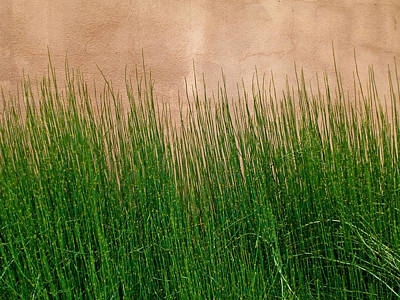 Art Print featuring the photograph Grass And Stucco by David Pantuso
