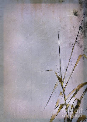 Grass And Wall Art Print by Judi Bagwell