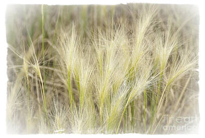 Photograph - Grass by David Waldrop