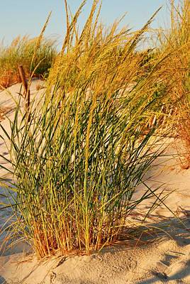 Photograph - Grass Dune I - Jersey Shore by Angie Tirado