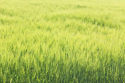 Grass Growing In Field Art Print