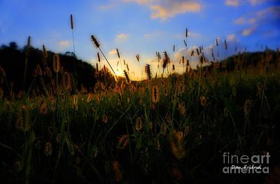 Grass In Field At Sunset Art Print by Dan Friend