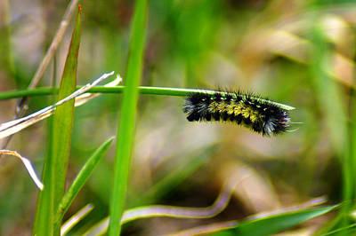Photograph - Grass Mustache by Bill Pevlor