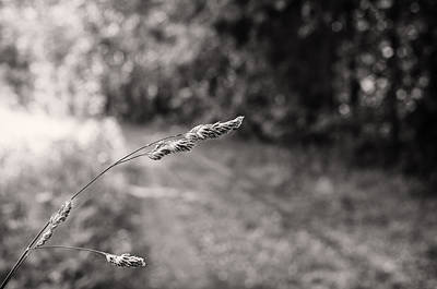 Photograph - Grass Over Dirt Road by Lori Coleman