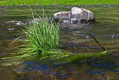 Photograph - Grass Rock Stick by Joseph Bowman