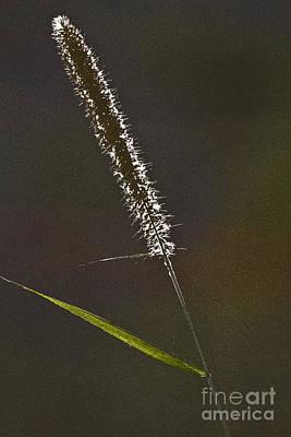 Grass Spikelet Art Print by Heiko Koehrer-Wagner