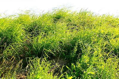 grass. WILD GRASS Art Print by Michael Clarke JP