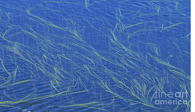 Photograph - Grasses And Water by Sandra Bronstein