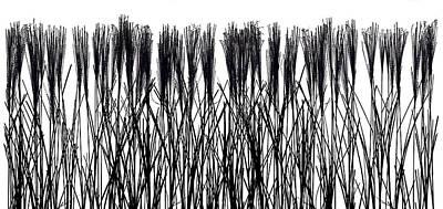 Grasses In Silhouette Original by Steve Gadomski