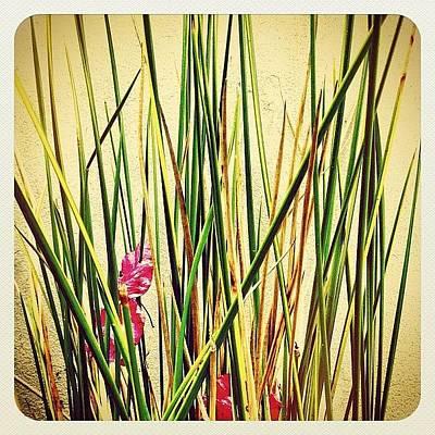 Flower Wall Art - Photograph - Grasses by Julie Gebhardt
