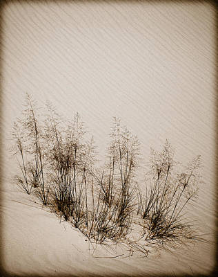 Photograph - White Sands, New Mexico - Grasses by Mark Forte