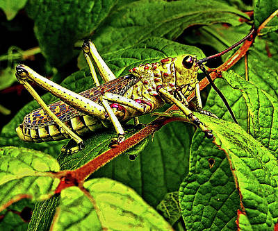 Grasshopper Digital Art - Grasshopper At The Lost City by Michael Durst