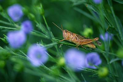 Grasshopper Art Print by Mike Grandmailson