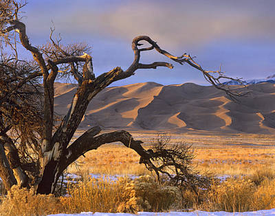 Photograph - Grasslands And Dunes Great Sand Dunes by Tim Fitzharris