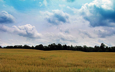 Photograph - Grassy Country Fields by Ms Judi