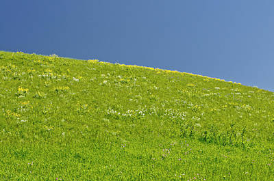 Grassy Slope View Art Print by Roderick Bley