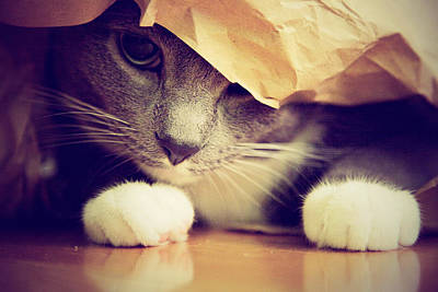 Paper Bags Photograph - Gray Cat In Bag by Weatherbee.arloartists.com