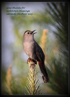 Gray Catbird - Indian Saying - Give Thanks... Print by Travis Truelove