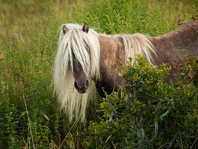 Photograph - Grayson Pony 1 by Joye Ardyn Durham