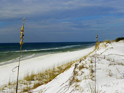 Photograph - Grayton Beach  Florida by Judy Wanamaker