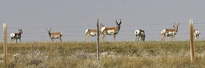 Grazing Antelope Art Print by Bruce Bley