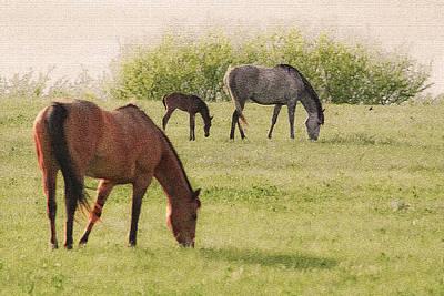 Photograph - Grazing by Barbara Dean