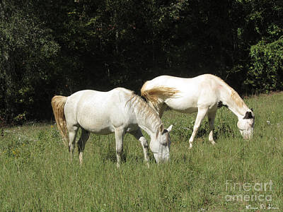 Photograph - Grazing by Donna Brown
