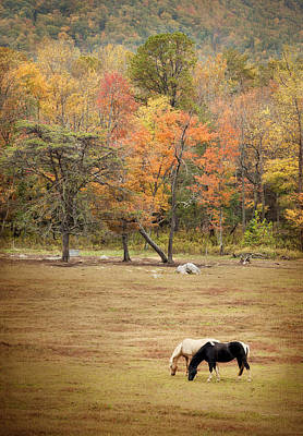 Photograph - Grazing Horses by Cheryl Davis