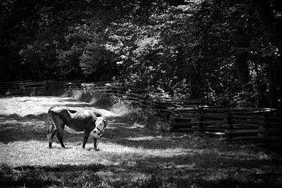 Photograph - Grazing by Jason Smith