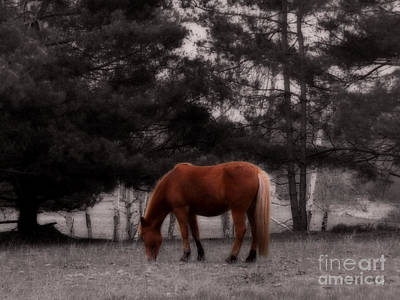 Photograph - Grazing Ranch Horse by Ms Judi