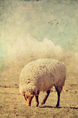 Grazing Sheep Art Print by Kathy Jennings