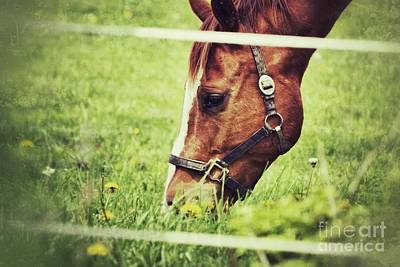 Photograph - Grazing by Traci Cottingham