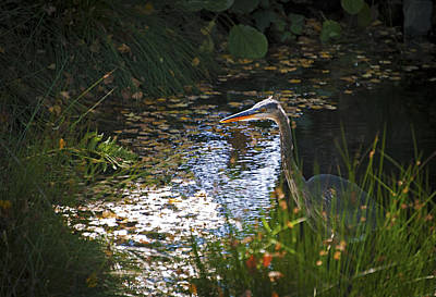 Photograph - Great Blue Heron by Anthony Citro
