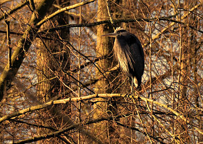Photograph - Great Blue Heron At Dusk by Lawrence Christopher