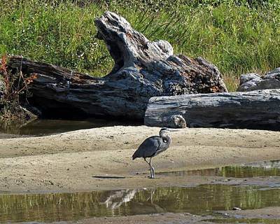 Photograph - Great Blue Heron by Chris Anderson