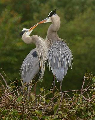 Art Print featuring the photograph Great Blue Heron Couple by Myrna Bradshaw
