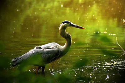 Photograph - Great Blue Heron by Emanuel Tanjala