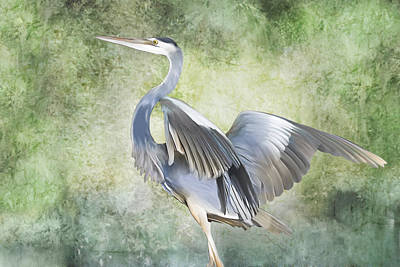 Digital Art - Great Blue Heron by Francesa Miller