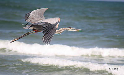 Photograph - Great Blue Heron In Flight by Roena King