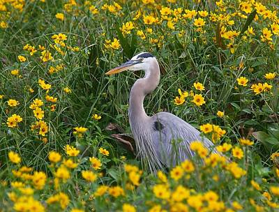 Art Print featuring the photograph Great Blue Heron In The Flowers by Myrna Bradshaw