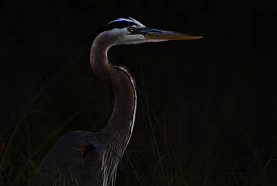Photograph - Great Blue Heron In The Sea Oats by Dorothy Cunningham