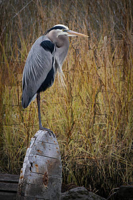 Photograph - Great Blue Heron On Spool by Debra and Dave Vanderlaan