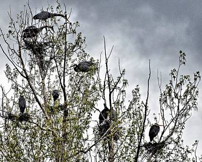 Bc Digital Art - Great Blue Heron Rookery-1 by Don Mann