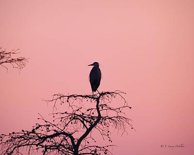 Digital Art - Great Blue Heron Silhouette by J Larry Walker