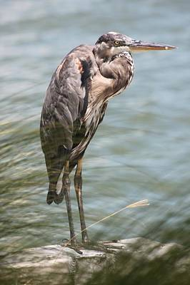 Photograph - Great Blue Heron Vigil by Jeanne Kay Juhos