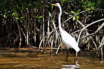 Photograph - Great Egret 1 by Joe Faherty