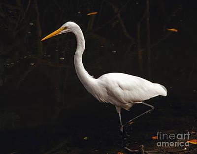 Great Egret Hunting Art Print by Art Whitton
