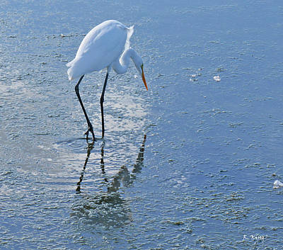 Photograph - Great Egret In Blue by Roena King