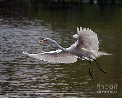 Great Egret In Flight Art Print by Art Whitton